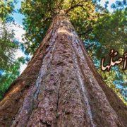 آيا نديدى چگونه خداوند كلمه طيبه (و گفتار پاكيزه) را به درخت پاكيزه اى تشبيه كرده كه ريشه آن (در زمين) ثابت، و شاخه آن در آسمان است؟!