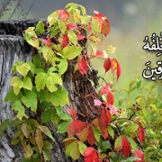 و هر چه را در راه او انفاق كرديد، پس او عوضش را جايگزين مىكند و او بهترین روزیدهندگان است